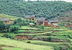 Madagascan countryside