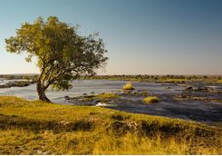 Lower Zambezi river
