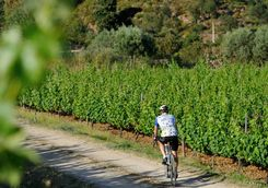 bike through the vineyards