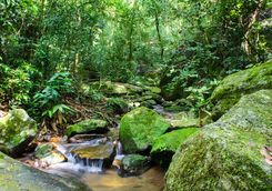 Small stream in the Tijuca forest