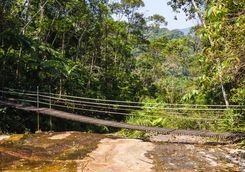 Tijuca forest bridge