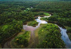 Minas Gerais forest