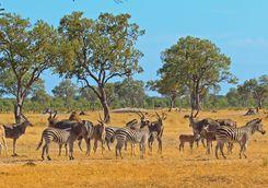 Zebra and antelope