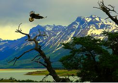 eagle at el calafate