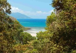 Daintree coast