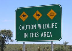 Wildlife sign post