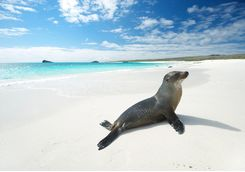a sea lion on a white sandy beach