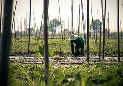 Farmer at Inle Lake