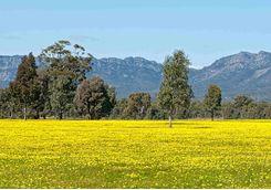 Yellow Wildflower Field
