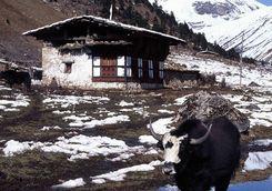 Yak huts in Bhutan