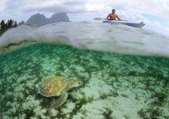 Capella Lodge marine sanctuary, Lord Howe Island