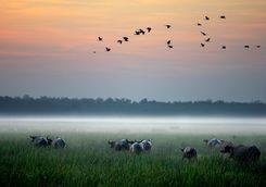 bamurru-wetlands