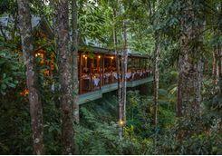 treehouse-restaurant