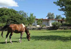 a horse at estancia los poteros