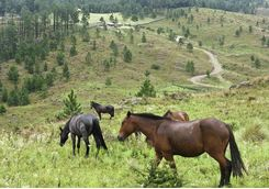 horses in Cordoba