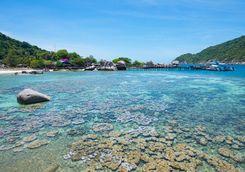 Koh Tao coral reef