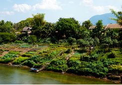 Agriculture along the Mekong River