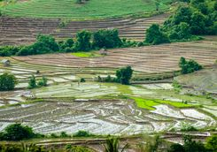 Ricefields Mae Chaem district