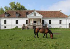 a brown horse at miklosvar