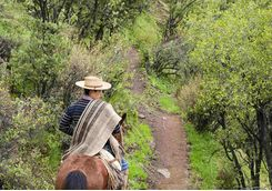 Cowboy horse riding in Chile