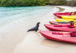 Galapagos sea kayaks