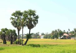 Countryside around Siem Reap