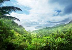 mahe tropical jungle