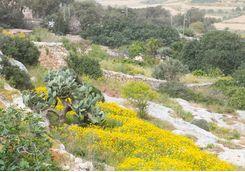 Spring in Gozo