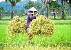 rice harvester