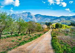 Mallorcan countryside