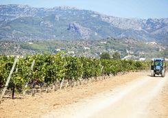 Mallorcan vineyard