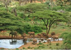Laikipia elephants