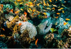 Reef in Mozambique