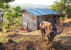 Village livestock