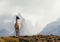 Llama mountain