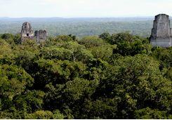 Tikal temple view