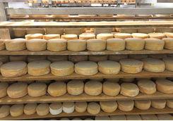 Cheese shelves