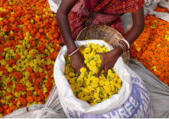 Sack of flowers in Kolkata market