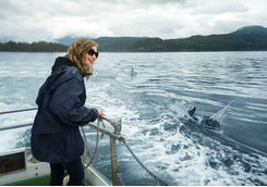 Dolphin watching Vancouver Island