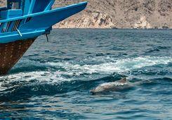 Dolphin alongside boat