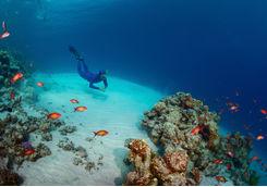 Diving sea
