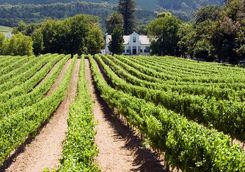 Franschhoek vineyard