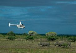 Flying to release rhinos