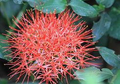 Flower in Bigodi sanctuary