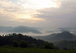 Morning mist over Bwindi forest