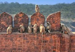 Monkeys Park