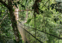 plank walk treetop canopies
