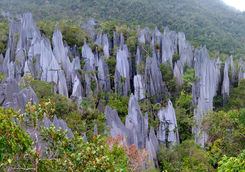 Pinnacles Mulu NP