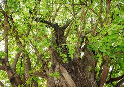 Banyan Tree Gaya Island