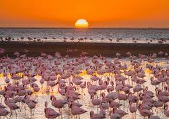 magnificent flamingos namibia
